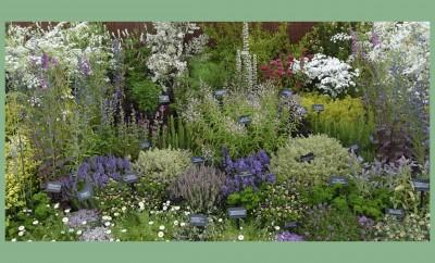 Aρωματικά και φαρμακευτικά φυτά