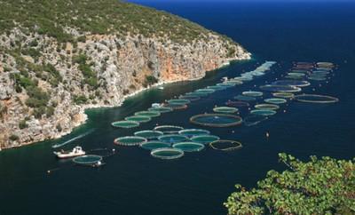 Ελληνική Υδατοκαλλιέργεια
