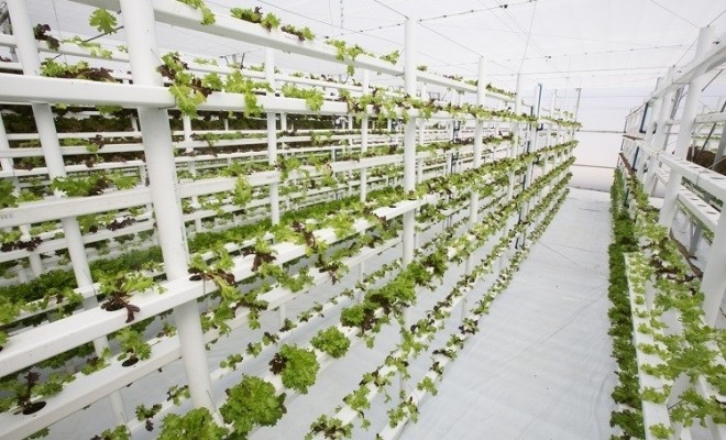 A vertical hydroponic greenhouse, growing leafy greens in an incredibly water efficient system that uses only 1% of the water a traditional soil-based farmer would use.