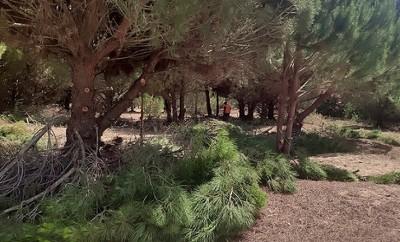 ΕθνικοΠάρκο Σχινιά – Μαραθώνα